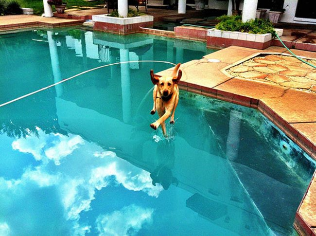 Perfectly Timed Photos Of Dogs