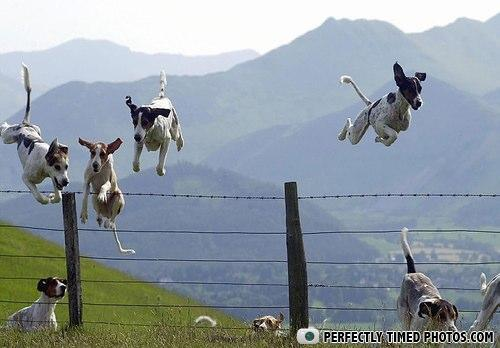 flyingdogs-5