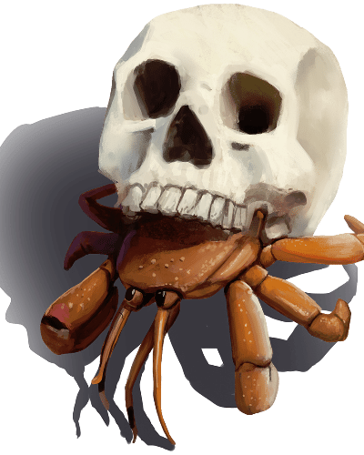 Skull Hermit Crab